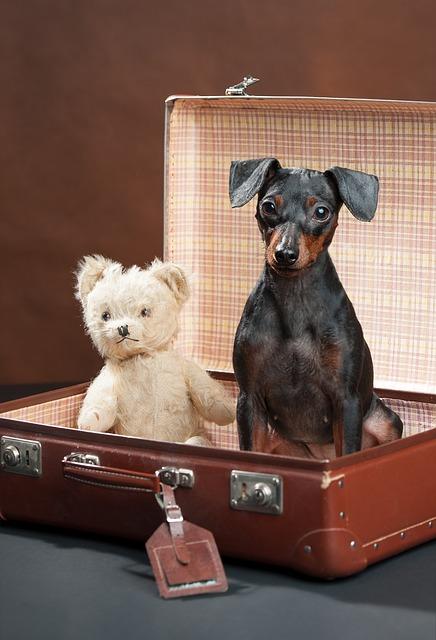 Viaje de perros